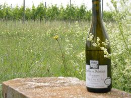 ワインと畑