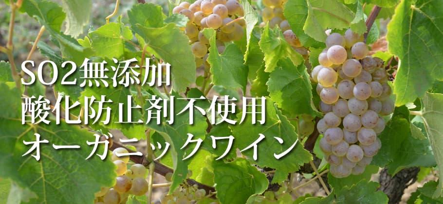SO2無添加ワイン特集