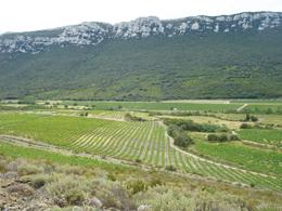 黒色片岩が層を形成している畑