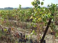 雑草も生えるオーガニック畑
