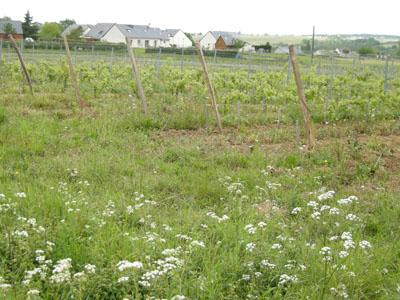 雑草がたくさん生えた自然な畑