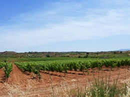 モンテサンコの畑